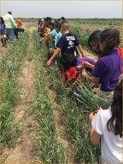 kids learn how to grow