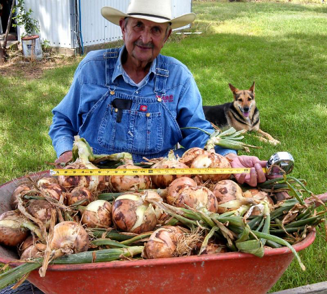 farmer with fresh onion harvest