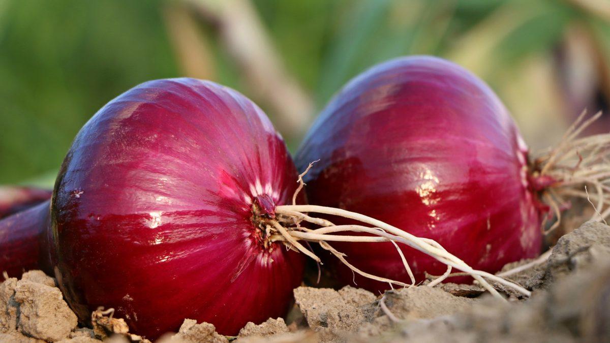 checkbook onion watering method